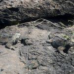 Galapagos03