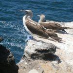 Galapagos13