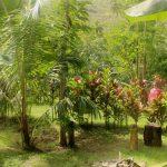 Marquesas   Nuku Hiva   Anse Hakatea - 091