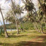 Marquesas   Nuku Hiva   Baie D'Anaho - 019
