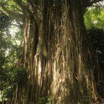 Marquesas   Nuku Hiva   Excursion - 167