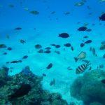 Islas Sociedad | Bora Bora - 456