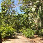 Islas Sociedad | Tahaa - 154