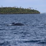 Tonga | Vavau Group  - 0964