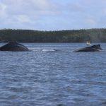 Tonga | Vavau Group  - 1145