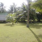 Tuvalu Islands | Funafuti | Funafara - 024