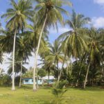 Tuvalu Islands | Funafuti | Funafara - 031