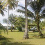 Tuvalu Islands | Funafuti | Funafara - 053