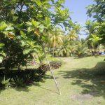 Fiji | Rotuma - 260